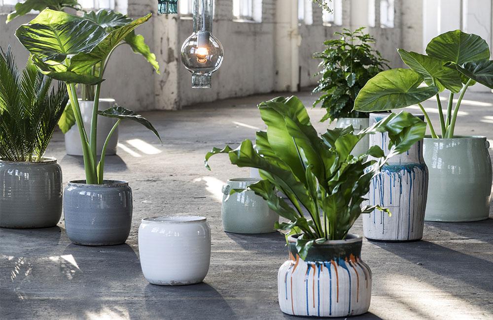 Plantes faciles à entretenir et tendance à la fois