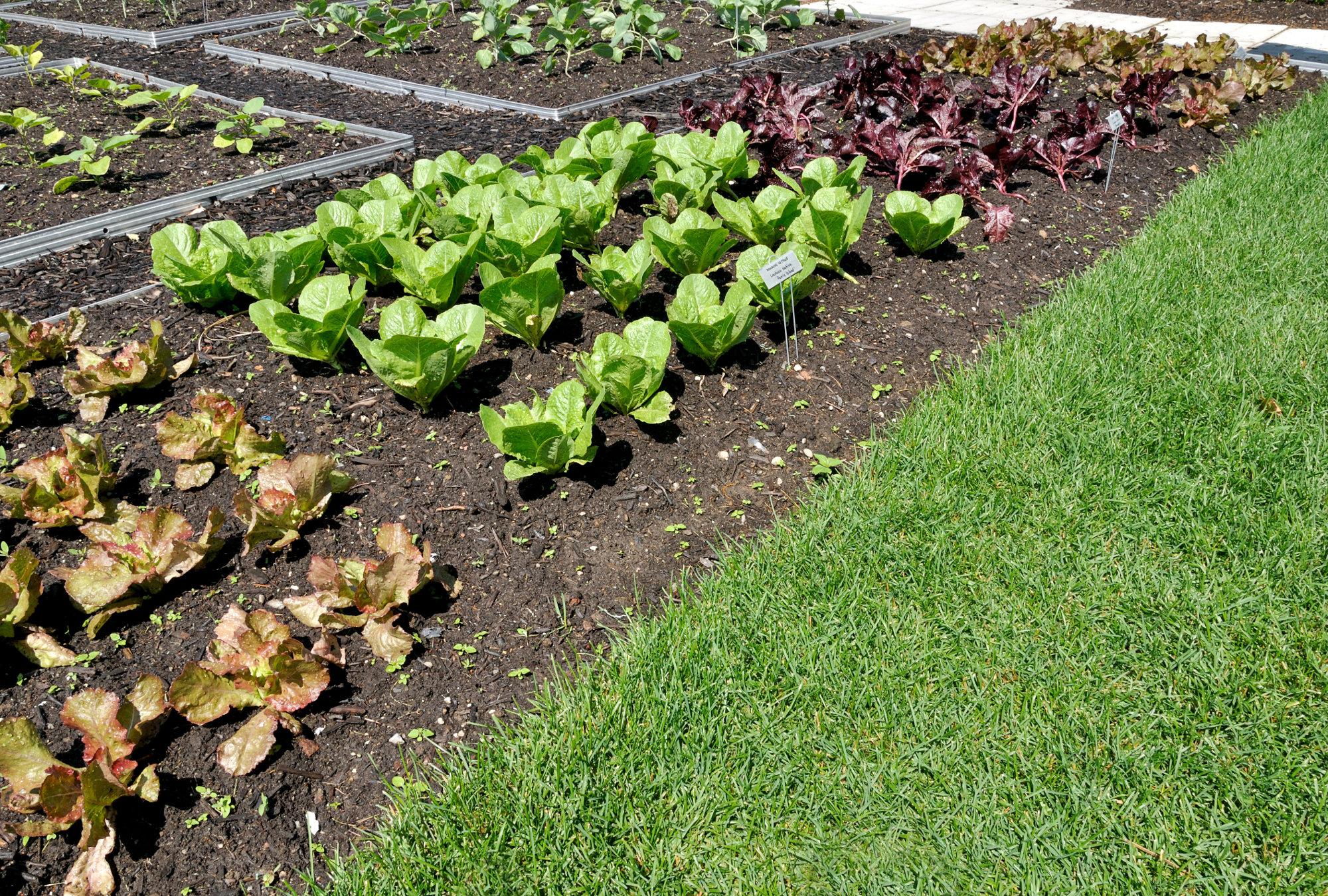 Comment réussir le semis du potager pour l'automne?
